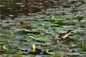 水鳥辨識營